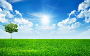 8845193-sunny-breeze